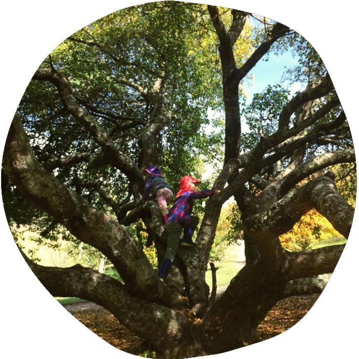 tree_climb710x710
